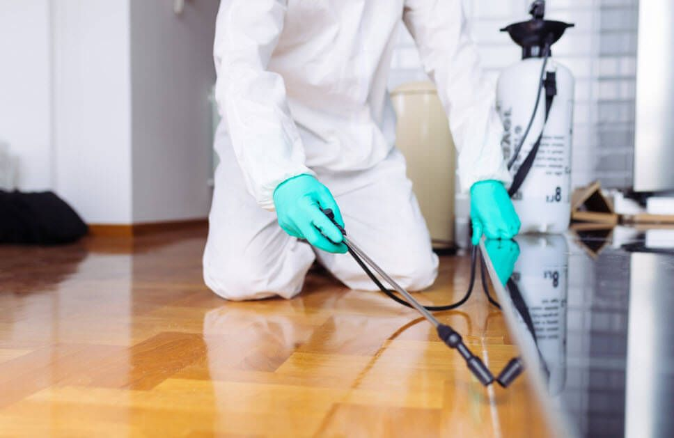 All You Need to Know about Pest Control Amherst NY