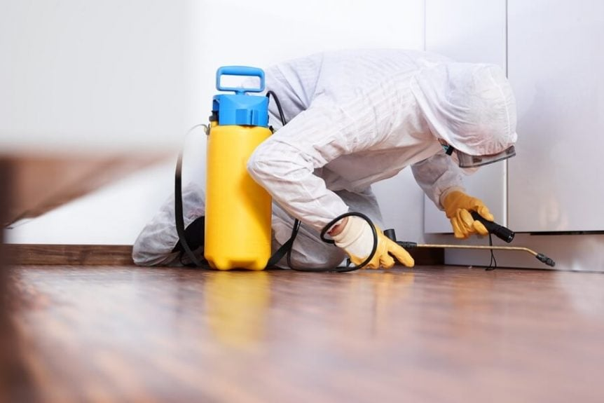 Treat Your Home for Pests – How Often Should You Do It?